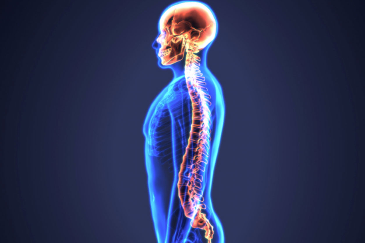 An x-ray inspired image of a boyd with the brain and spine highlighted in orange.