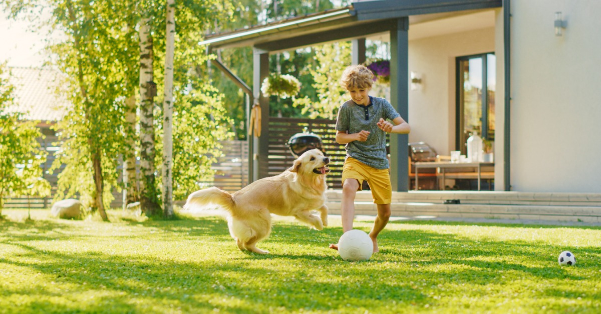 Young boy in yellow shorts is playing outside with his golden retriever.